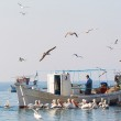 Fishing Boat and the fisherman surrounded by seagulls and pelica — Stock Photo #46557413