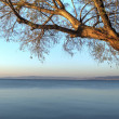 Swaying tree over the ocean and a town,Tonemapped HDR image. — Stock Photo #47126257
