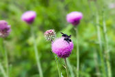 Insects eating the nectar of a purple flower — Stock Photo