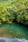 The green waters of Voidomatis river that flows through Epirus r — Stock Photo