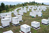 Beehives at green field against cloudy sky.  — Stock Photo