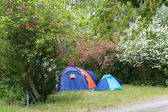 Campsite with caravan and tent in summertime.  — Stock Photo