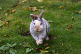 Rabbit - Hase — Stock Photo