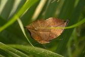 Butterfly — Stockfoto