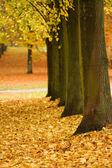 Autumn leaves - Herbstlaub — Stock Photo