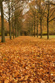 Autumn leaves - Herbstlaub — Stock Photo