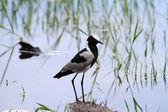 Příroda pták — Stock fotografie