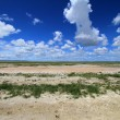 Desert Etosha Nationalpark Namibia — Stock Photo
