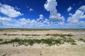 Desert Etosha Nationalpark Namibia — Stock Photo