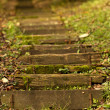 Forest stairs — Stock Photo #35612605