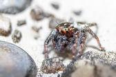 Spider. Close up. — Stock Photo