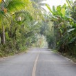 Постер, плакат: Paved road in the Coconut