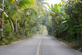 Paved road in the Coconut — Stock Photo