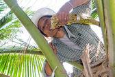 Ratchaburi, Tha Kha, a coconut plantation. — Stock Photo