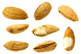 Almond collection — Stock Photo