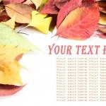 Autumn leaves — Stock Photo #45719439
