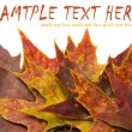 Autumn leaves — Stock Photo #45719593