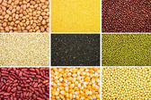 Grain collection — Stock Photo