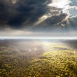 Aerial view of the forest under clouds — Stock Photo