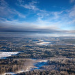 Forest of plain in winter — Stock Photo