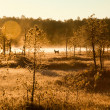 First frost in the autumn forest — Stock Photo
