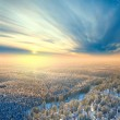 Top view of winter forest — Stock Photo #33521479