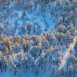Top view of forest at winter morning — Stock Photo