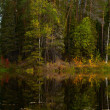 Fisher in boat is on the forest lake in autumn — Stock Photo #33522643
