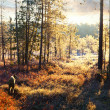 First frost in the autumn forest during hunt — Stock Photo