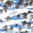 Woodland in winter day, view from above — Stock Photo