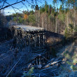 Stock Photo: Destroyed bridge in the forest