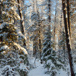 In winter forest — Stock Photo