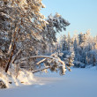 Forest river in  winter — Stock Photo