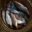 Stock Photo: Fishes are in a corf