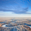 Aerial view of forest in winter — Stock Photo
