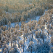 Top view of winter forest — Stockfoto