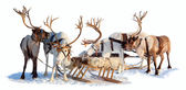 Reindeers in harness — Stock Photo