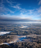 Forest of plain in winter — Stock fotografie