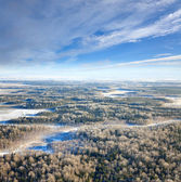 Forest plain in winter — Stock Photo