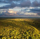 пейзаж с лесом и облаками — Стоковое фото