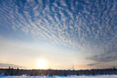 Winter forest panorama at sunset — Stockfoto