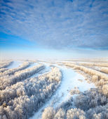 Magnificent hoarfrost on trees — Stock fotografie