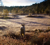 Dog in frosty forest — Stock Photo