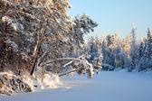Kışın orman nehri — Stok fotoğraf