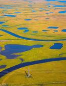 Tundra no outono — Fotografia Stock