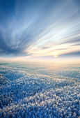 Top view of winter forest — Stock Photo