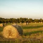 dziedzinie świeżo bele siana z piękny zachód słońca — Zdjęcie stockowe