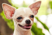 Cute little dog — Stock Photo