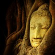 Buddha head — Foto Stock #34577141