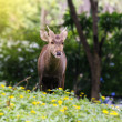 Young deer — Stock Photo #34584281